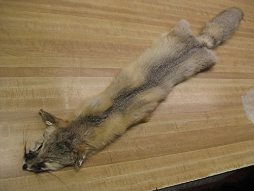 Tanned Swift Fox Hide #3 Quality Fur Coats Pelt (32