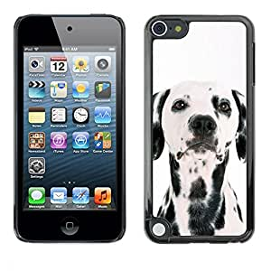 PC/Aluminum Funda Carcasa protectora para Apple iPod Touch 5 Dalmatian Dog White Black Spots Breed / JUSTGO PHONE PROTECTOR