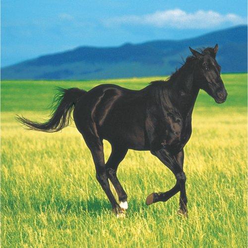 Horse Napkin - 1