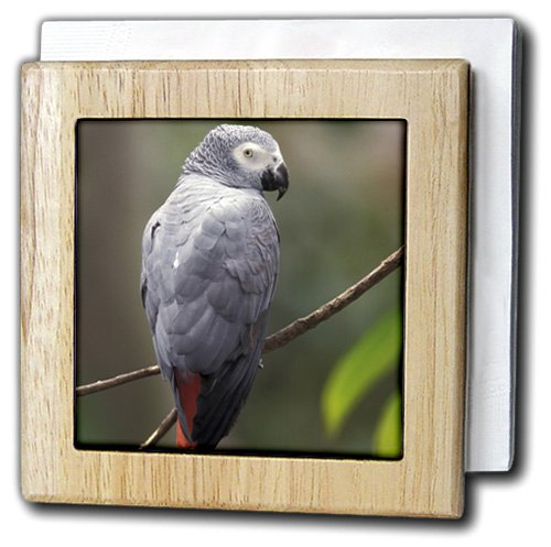 3dRose African Gray Parrot, Tropical Bird - NA02 AJE0248 - A