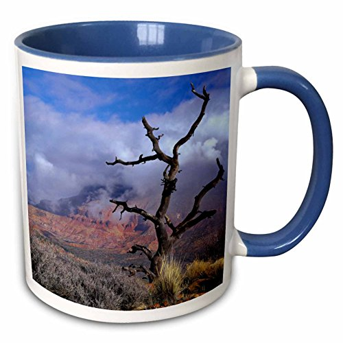 (3dRose Danita Delimont - Trees - Pinyon pine snag tree, Mt Kinesava, Utah, USA - US45 SSM0426 - Scott T. Smith - 15oz Two-Tone Blue Mug)