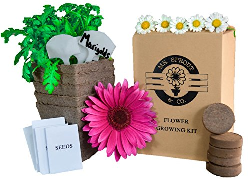 Mr. Sprout Organic Flower Starter Kit - Flower Kit for Kids, Adults Or Gift Idea - Flower Seed Starter Kit Includes Zinnia, Chrysanthemum, Marigold, Wildflower and Daisy