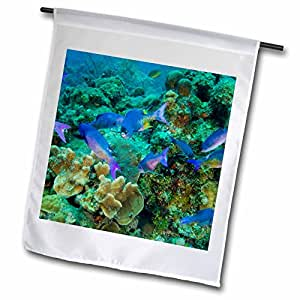 Danita Delimont - Fish - Creole Wrasse fish, Hol Chan Preserve, Belize - SA02 SWE0072 - Stuart Westmorland - 18 x 27 inch Garden Flag (fl_85632_2)