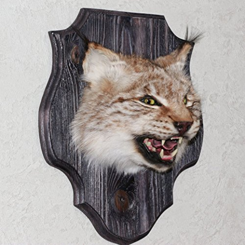 StoreTaxidermy LLC (Taxidermy Studio) EURASIAN LYNX TAXIDERMY HEAD SHOULDER MOUNT - NOT BOBCAT MOUNTED, STUFFED ANIMALS FOR SALE - REAL, DECOR, WALL MOUNT - ST4326