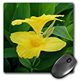 Best 3dRose Computer Pads - 3dRose Taiche Photography Canna Lilies - Closeup Tropical Review