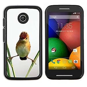 EJOOY---Cubierta de la caja de protección para la piel dura ** Motorola Moto E ** --Angry Bird Naturaleza Permanente de paja