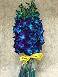 Blue Dyed Dendrobium Orchids-FREE RIBBON-Eflowerwhosale