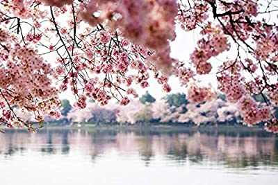 Washington, DC - Cherry Blossoms over Tidal Basin - Photography A-93369 (24x36 Fine Art Giclee Gallery Print, Home Wall Decor Artwork Poster)