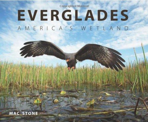 Everglade Alligator (Everglades: America's Wetland)