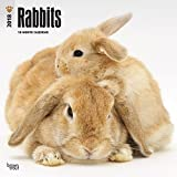 Rabbits 2018 12 x 12 Inch Monthly Square Wall Calendar, Domestic Pet Animals