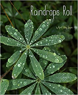 Image result for raindrops roll sayre