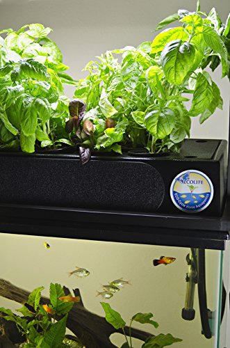 51zY469BPGL - ECO-Cycle Aquaponics Indoor Garden System with LED Light Upgrade
