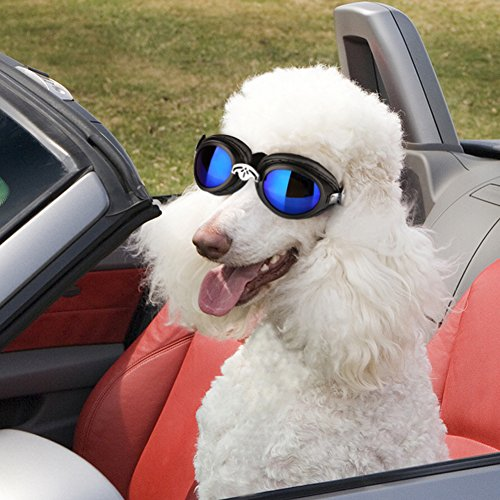 PETLESO Dog Doggles for Large Dogs Goggles Eye Wear Protection Waterproof Doggles Black by Pet Leso