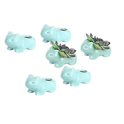 Amazon.com: Doyolla Mini macetas suculentas Bulbasaur – 6 ...
