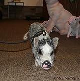 Mini Pig Harness (Black)