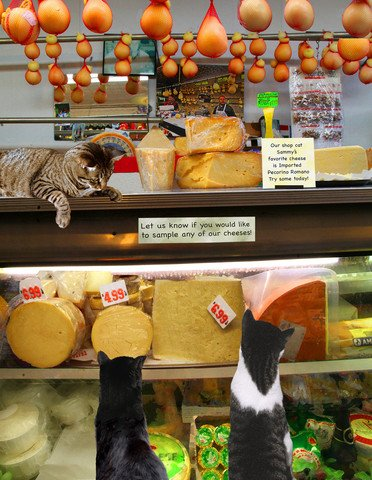 Cat Greeting Cards, Handmade 5 X 7 Inch, Cats in a Cheese Shop on Arthur Avenue, Bronx, 10-pack, By Deborah Julian Art