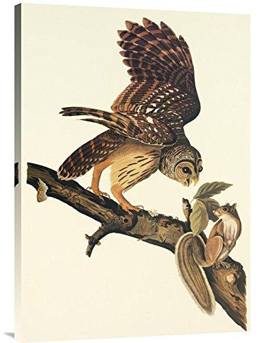 Global Gallery Budget GCS-197745-36-142 John James Audubon Barred Owl Gallery Wrap Giclee on Canvas Print Wall Art