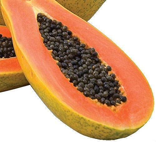 David's Garden Seeds Fruit Papaya Red Maradol 4492 (Red) 15 Non-GMO, Hybrid Seeds