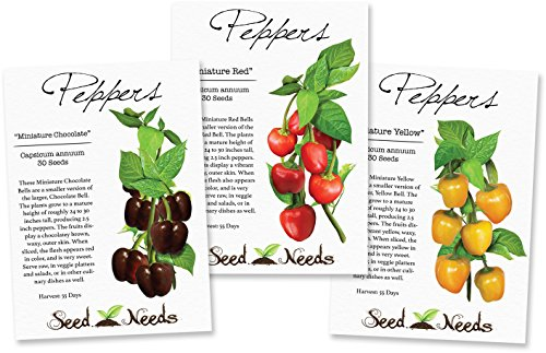 Miniature Bell Pepper Collection (3 Individual Seed Packets) Non-GMO Seeds by Seed - Chocolate Pepper Bell