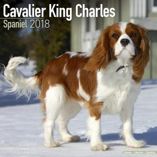 Cavalier King Charles Breed (Cavalier King Charles Calendar - Dog Breed Calendars - 2017 - 2018 wall Calendars - 16 Month by Avonside)