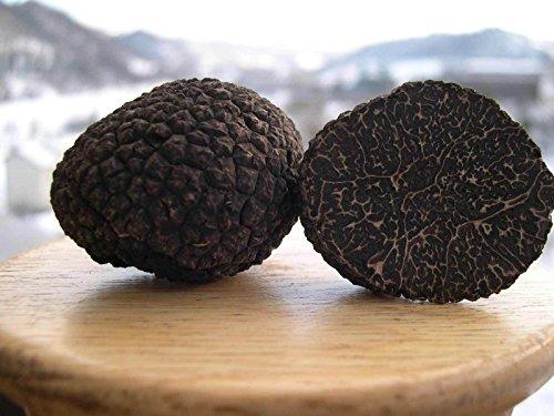 (Spores Black Truffle Mushrooms Mycelium Spawn Dried Seeds Kit for Planting Non GMO 0.25 oz)