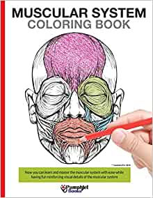 This is a graphic of Impertinent Muscular System Coloring Book