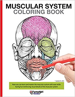 Amazon.com: Muscular System Coloring Book: With colored ...