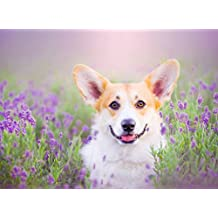 PigBangbang,Stained Art Jigsaw Puzzle Kids Adult Literate Jigsaw Puzzle 500 Piece 20.6 X 15.1''Made of iece Home Decoration-Lovely Corgi