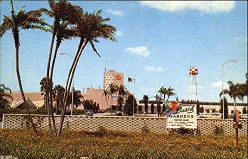 over-all-view-of-busch-gardens-tampa-florida-original-vintage-postcard