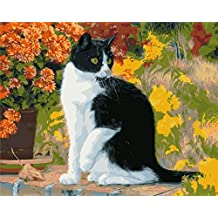 Wooden Framed Paint by Number or Not - New Release Diy Oil Painting by Numbers - Pussy Cat 16*20 inches - PBN Kit for Adults Beginner Girls Kids Picture Decor Decorations Gifts