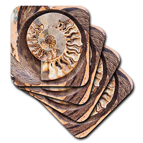 3dRose CST_208255_2 A Fossilized Shell Cut in Half. Santa Fe, New Mexico, USA. Soft Coasters, (Set of 8)