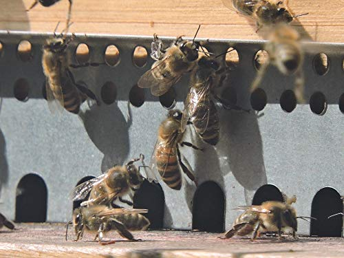 Peel-n-Stick Poster of Bee Hive Apis Mellifera Bee Honey Bee Hive Vivid Imagery Poster 24 x 16 Adhesive Sticker Poster Print ()