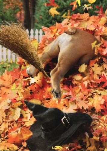 Halloween Dog In Hedge - Avanti Funny Halloween Card