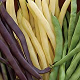 buy Burpee Three Color Blend Bush Bean Seeds 2 ounces of seed now, new 2019-2018 bestseller, review and Photo, best price $6.89