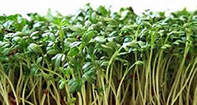 Curled Cress Seed, Sprouts, Heirloom, Organic 500 Seeds, Broadleaf, Micro Greens