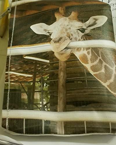 (Coin purse Baby Giraffe)