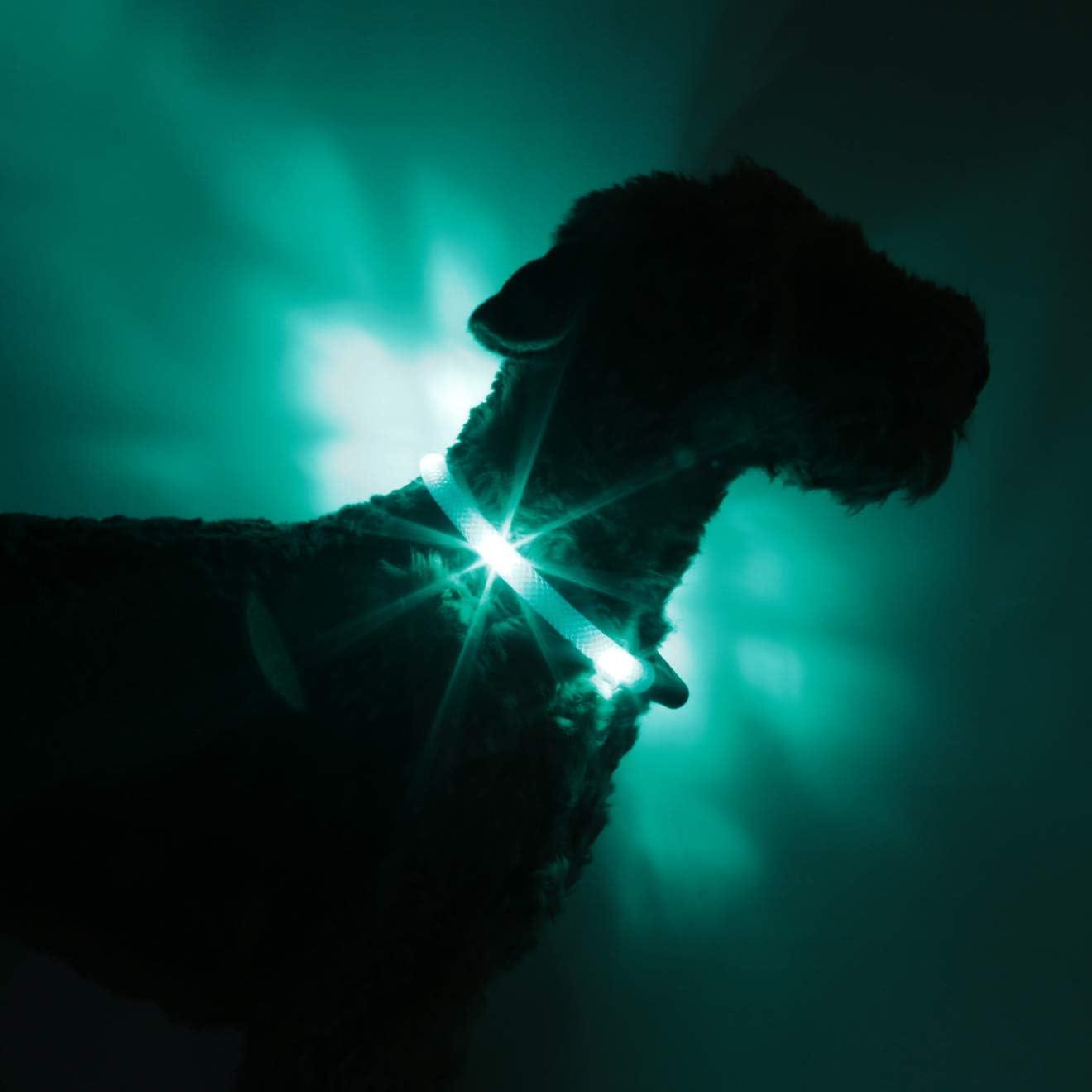 Leuchtie Leuchthalsband Plus Türkis Größe 42 5 I Led Halsband Für Hunde I 100 H Leuchtdauer I Wasserdicht I Enorm Hell Haustier