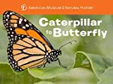 Caterpillar to Butterfly (Science for Toddlers) offers