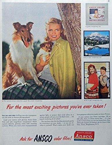 Ansco Film Color (Ansco Color Film, 40's Print Ad. Full Page Color Illustration (dogs) Rare, Original Vintage 1947 Collier's Magazine Art)