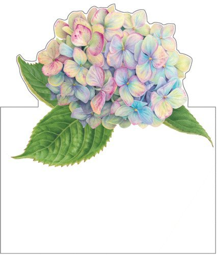Place Cards No Place Card Holders Needed Party & Wedding Place Cards Hydrangea Garden Pk 16 by Caspari