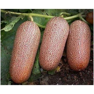 150 Certified USDA Organic POONA KHEERA Cucumber (VRZ) Seeds : Garden & Outdoor