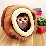 XFCS Curious Cat Cube,Lovely Lion Pose Cat House - Best Reviews Guide