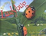 Ladybug, Claire Lewellyn, 1559718927