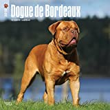 Dogue de Bordeaux 2018 12 x 12 Inch Monthly Square Wall Calendar, Animals Dog Breeds