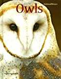 Owls, Tom Warhol, 0761425373