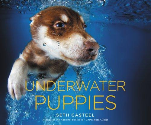 Underwater Puppies Seth Casteel ebook
