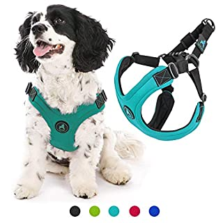 Gooby Dog Harness - Turquoise, Small - Escape Free Sport Patented Step-in Neoprene Small Dog Harness - Perfect on The Go Four-Point Adjustable Harness for Small Dogs or Cat Harness