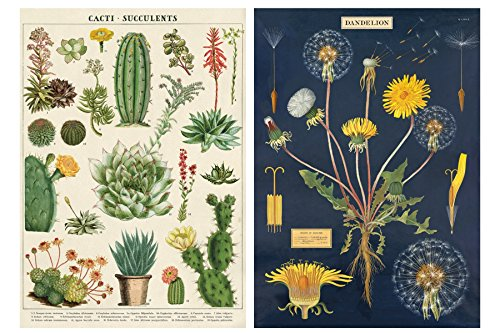 Dandelion and Cacti/Succulent Poster Set of 2 Cavallini 20 x 28 Wrap