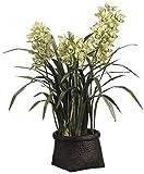 42'' Cymbidium Orchid Plant in Woven Basket Green