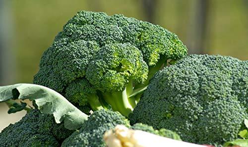 Broccoli Seeds (Waltham 29), 300+ Premium Heirloom Seeds, ON Sale!, (Isla's Garden Seeds), Non GMO Organic, 85% Germination, Highest Quality.